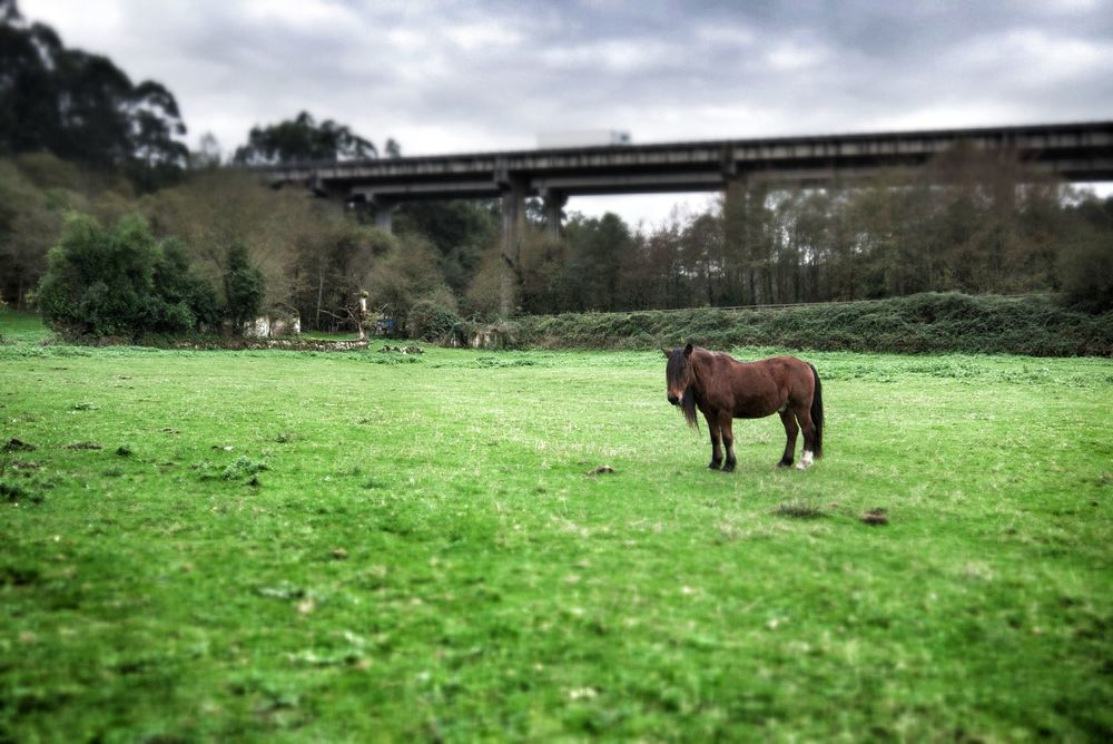 Ponies watch us as we explore the ruins as cars speed past on the motorway above
