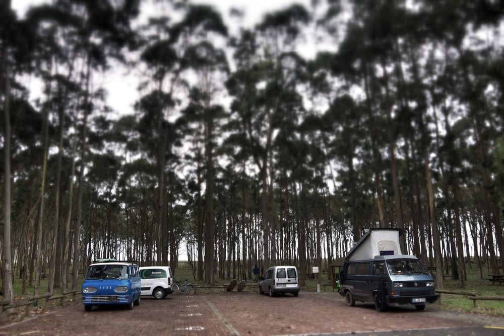 Our camp for the night in a Eucalyptus forest