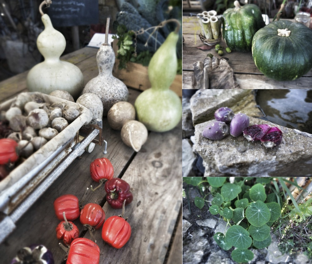 Marrows, pumpkins, peppers, prickly pears and nasturtiums are just some of the produce on display