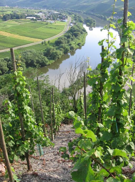 Zicht op de Ürziger Würzgarten wijngaard