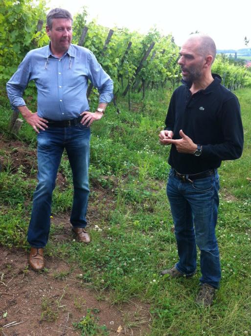 In de Zellberg wijngaard van  André Ostertag, nabij Nothalten