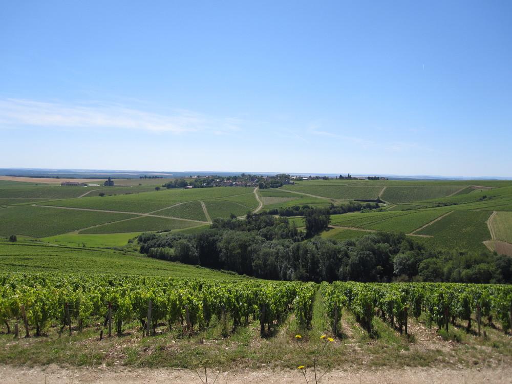 Overlooking-Chablis-vineyards_-23_07_12.jpg
