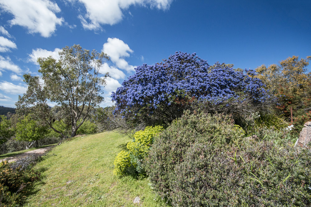 Mike and Carl had a wide variety of neat plants on their property, including this blue-flowering bush.