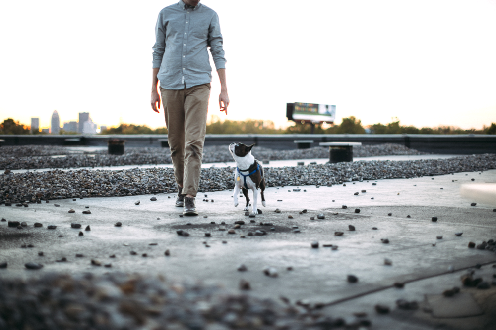 Haaken and his Boston Terrier by Grace E. Jones Photography
