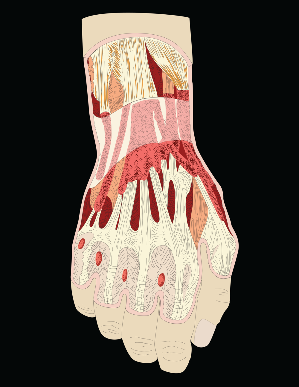 Interior of Hand
