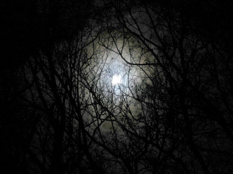 黑夜森林动态背景