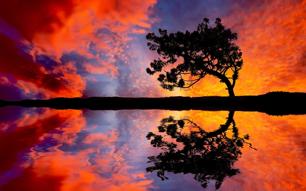 Tree-Sunset-Reflection.jpg