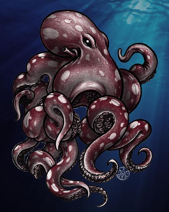 cephalopod2.jpg