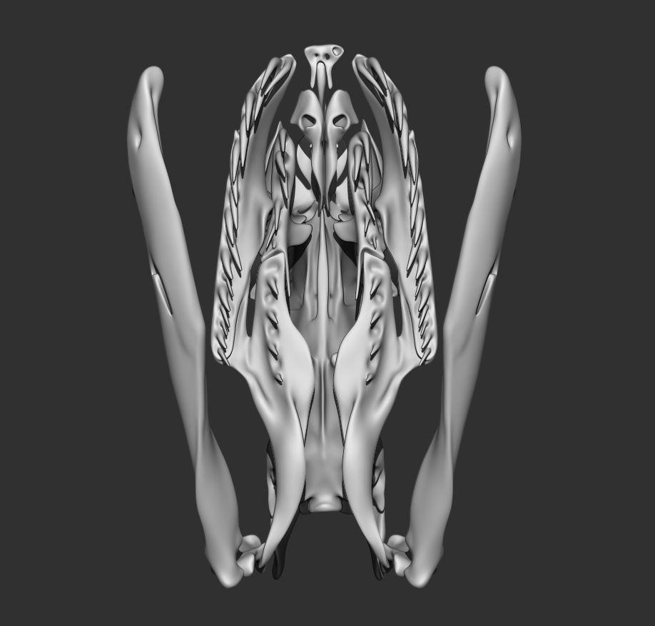 Skull_003.JPG