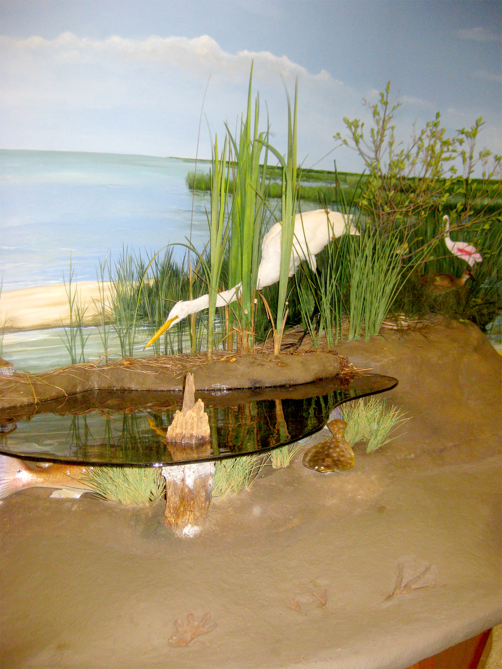 Hand-painted murals are custom designed to fit diorama details. Taxidermy is custom mounted for each location.