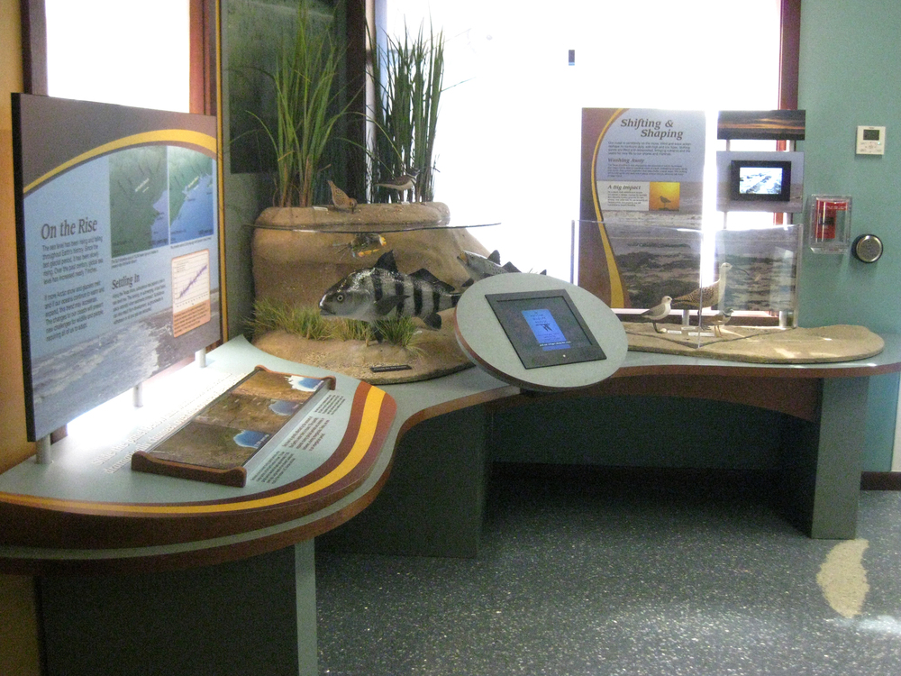A corner display incorporates mechanical interactives; model vegetation, fish, and birds; looping video; an interactive touchscreen game; as well as interpretive and graphic panels.