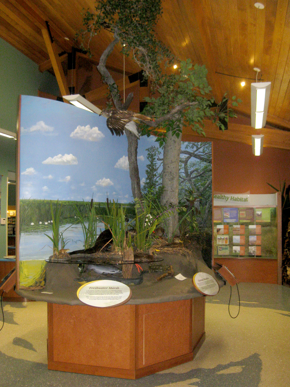 A central diorama introduces three distinct habitats and includes three hand-painted background murals. A series of interpretive panels leads visitors to the Alligator Incubator, a walk-in children's area filled with hands-on interactives.