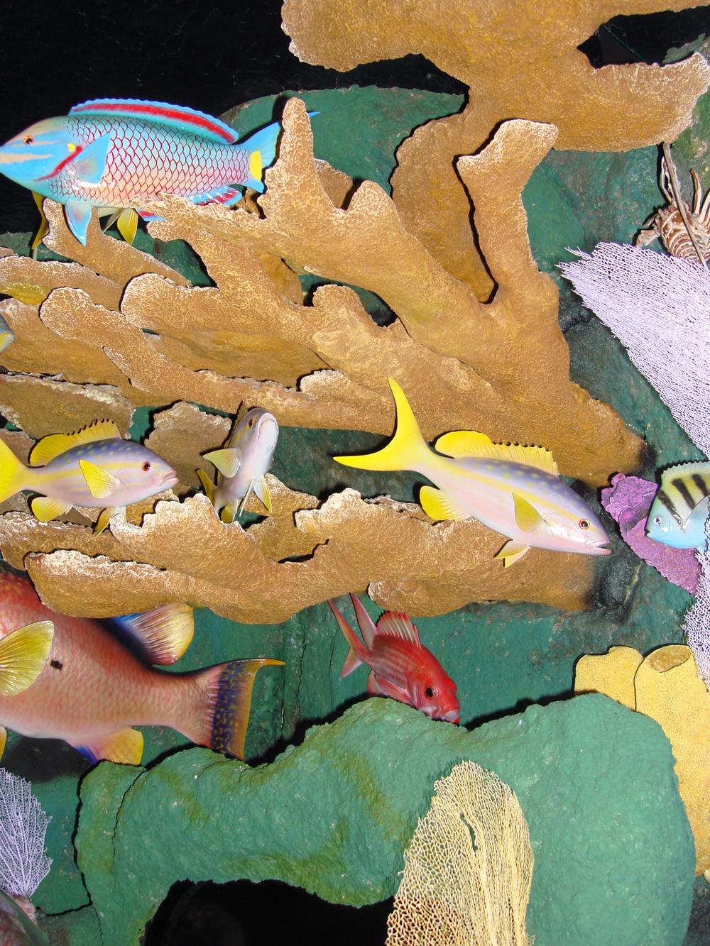 CINM_07_Nat Hist_Coral Reef Model.jpg