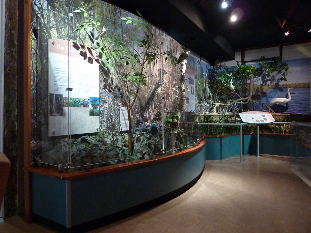 "A corner mangrove diorama is enclosed by an aluminum railing with a durable powder-coated finish. Scratch-and-abrasion resistant (SAR) acrylic protects a narrow diorama of Cayman cliff rock habitat. Exhibits were designed to leave ""breathing room"" for the building's historic wattle-and-daub walls."