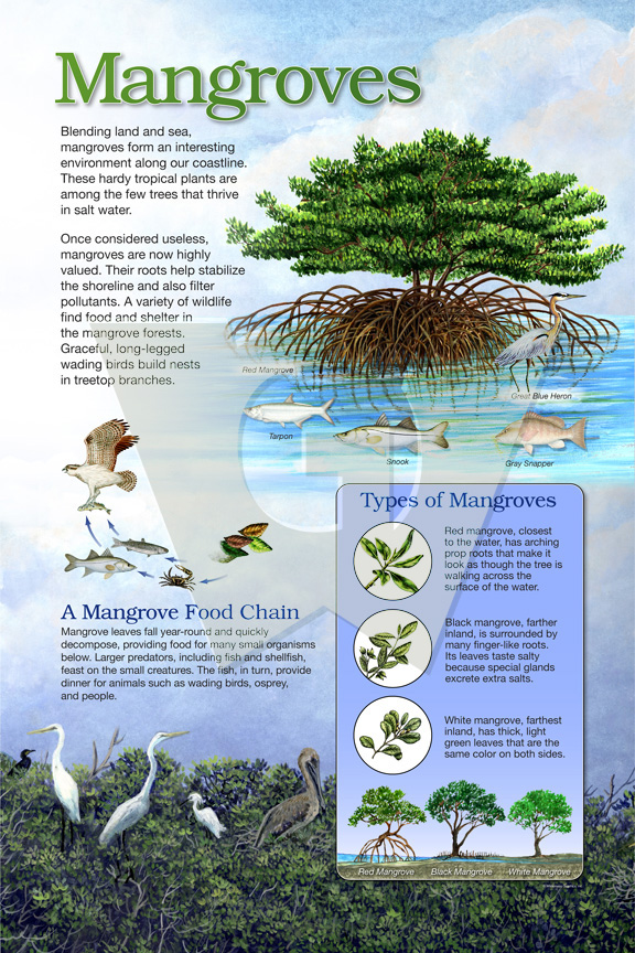 mangroves_lg_water.jpg