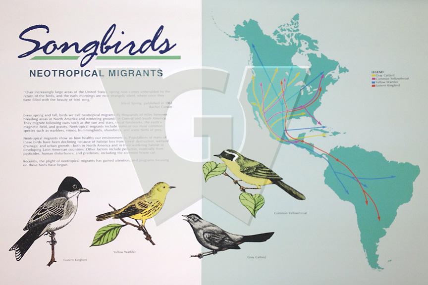 songbirds_lg_water.jpg