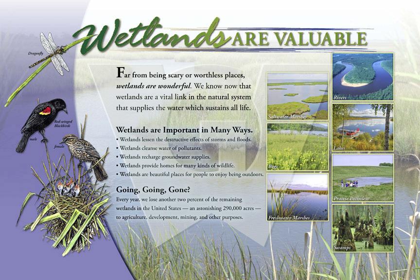 wetlands_lg_water.jpg