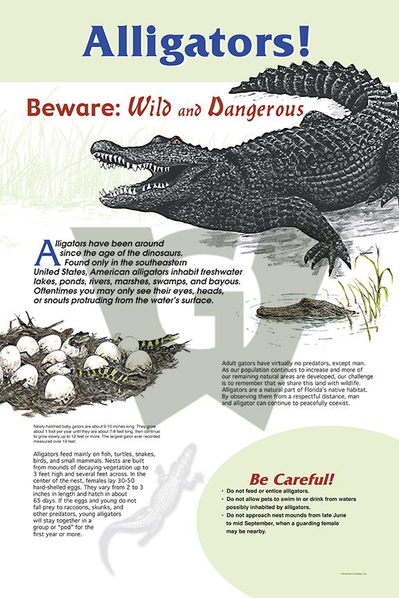 alligator_lg_water.jpg