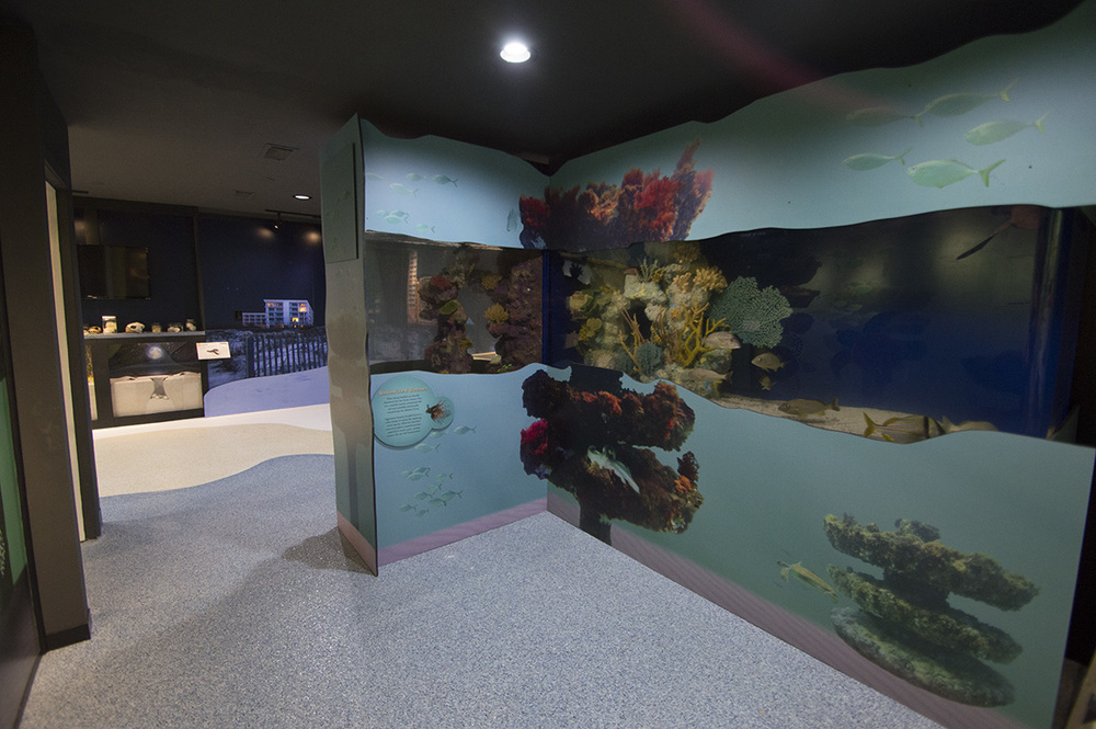 Aquariums are a great way to bring visitors closer to underwater life!