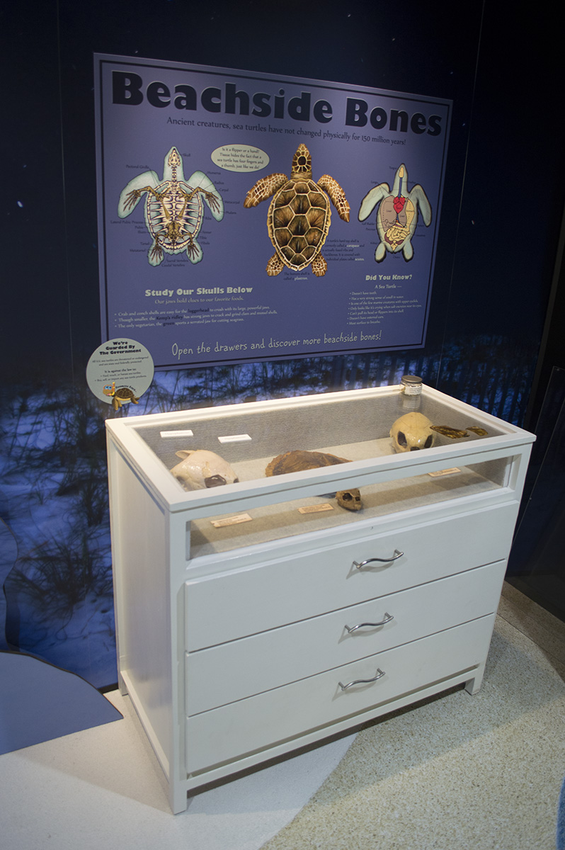 Custom display case showcases turtle bones.