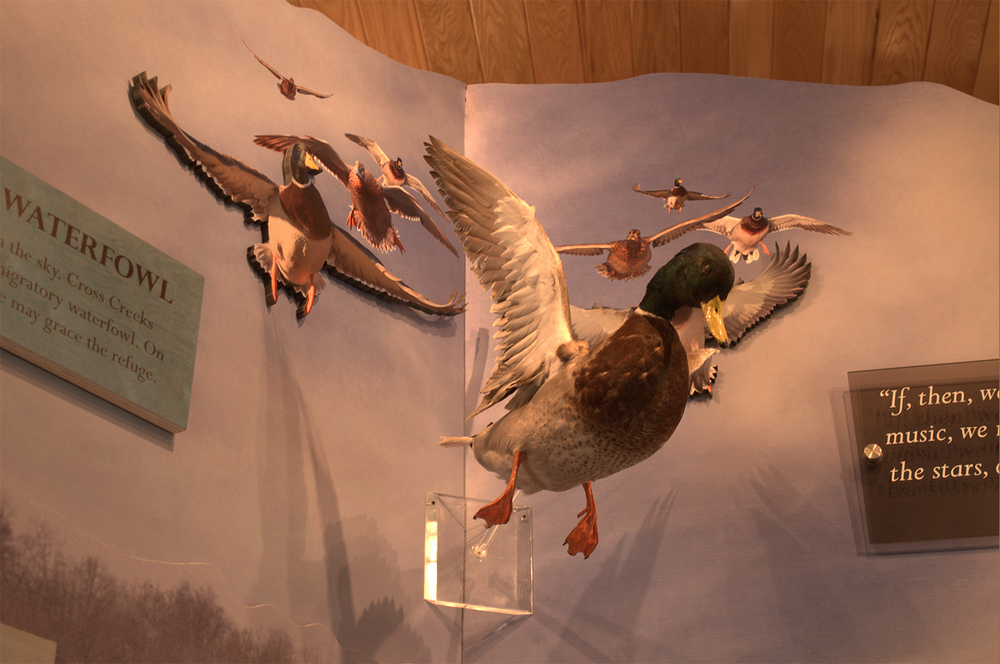 A mixture of high-def printing, depthscape, and taxidermy creates a fantastic, layered sight of birds coming in to land.