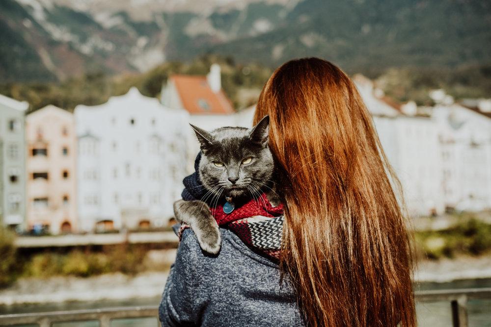 Captured by Shoot My Travel 📸 Cat in Innsbruck, Austria.