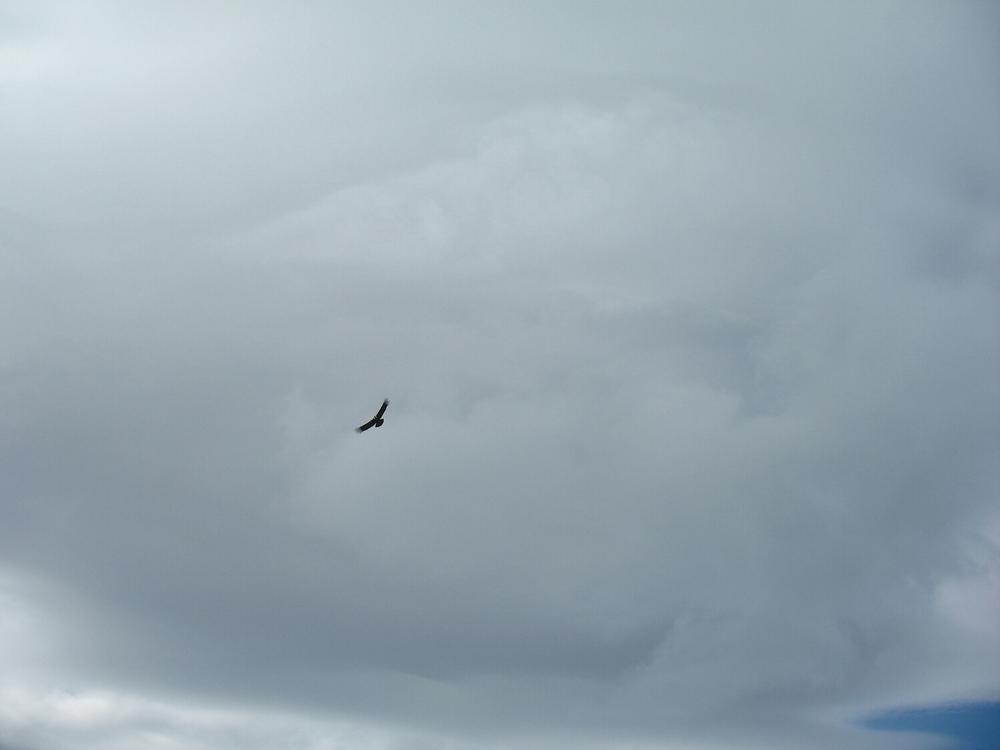 Nearly ten feet of wings.