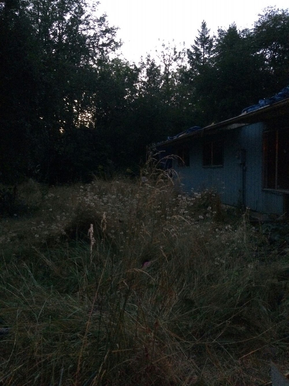 the overgrown front yard in not-quite-dawn light
