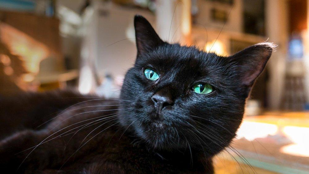 Cat Behavior Solved.jpg