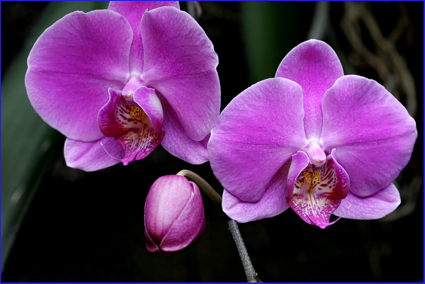 maudpichol.blogspot