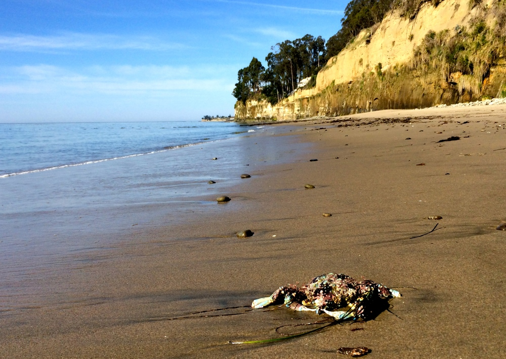 Okay, yes, there is a dead crab in the foreground, but it is a colorful dead crab. Capitola in the background.