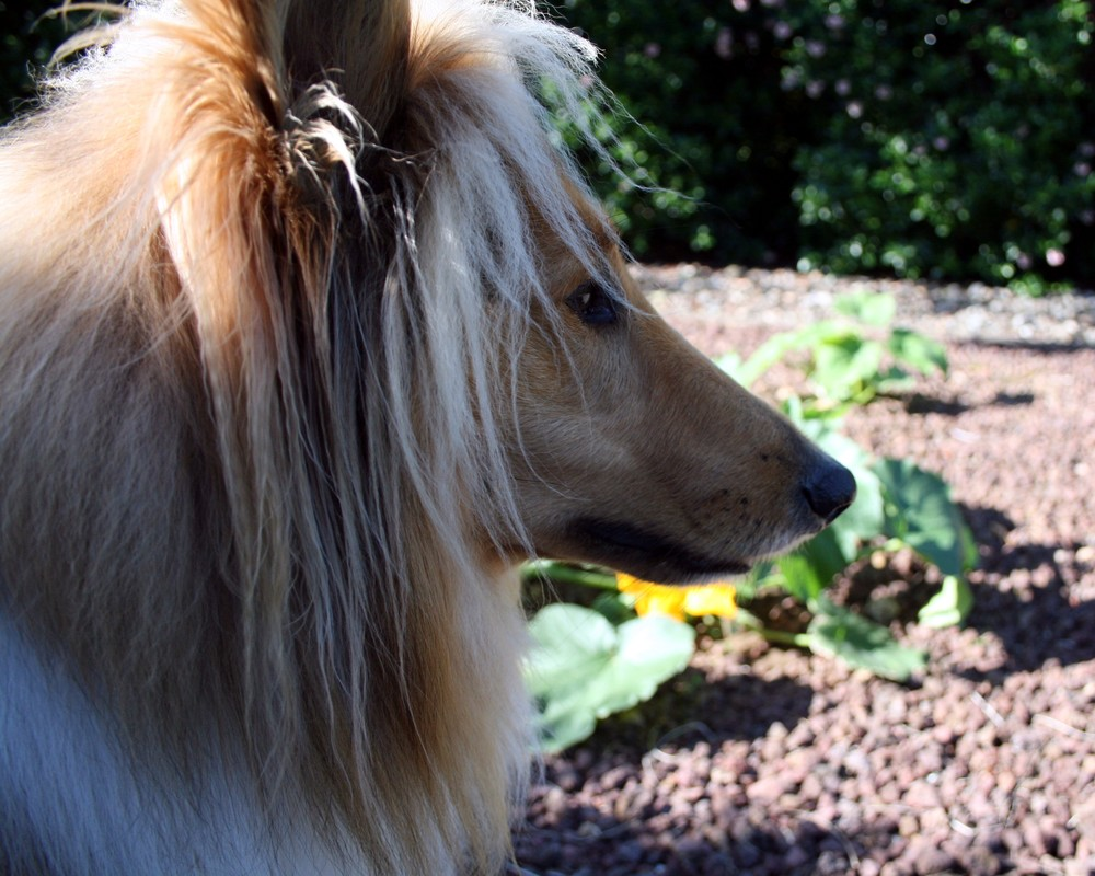 Guard Dog of the Royal Zucchini
