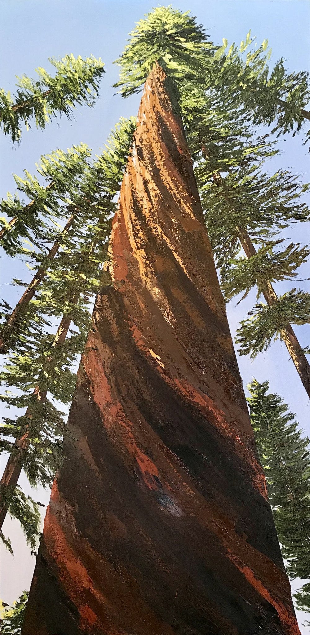 Sequoia Stands