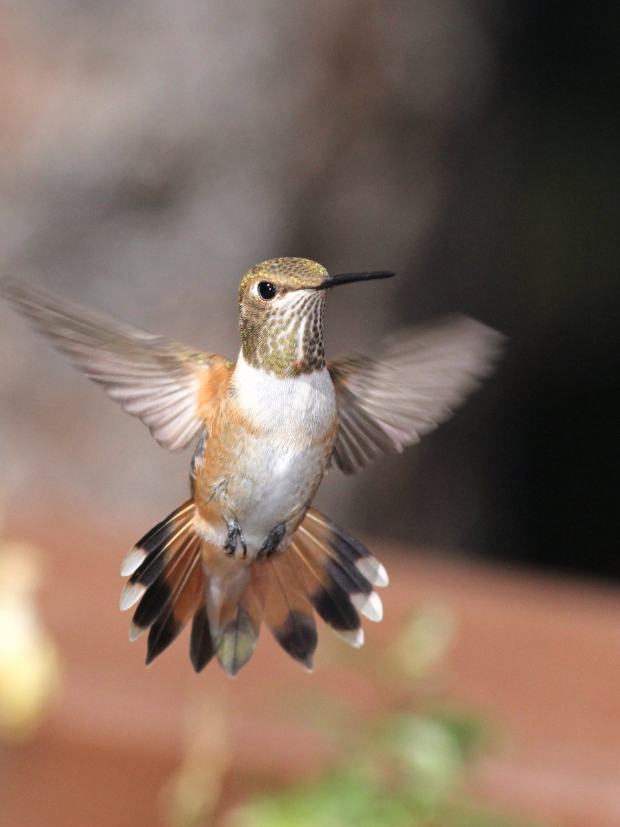 hummingbird-MikeHatherly.jpg