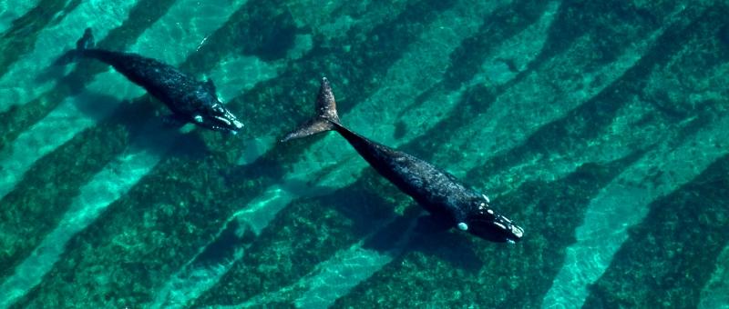 Mariano Sironi / Instituto de Conservación de Ballenas