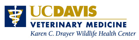 Visit the Karen C. Drayer Wildlife Health Center website.