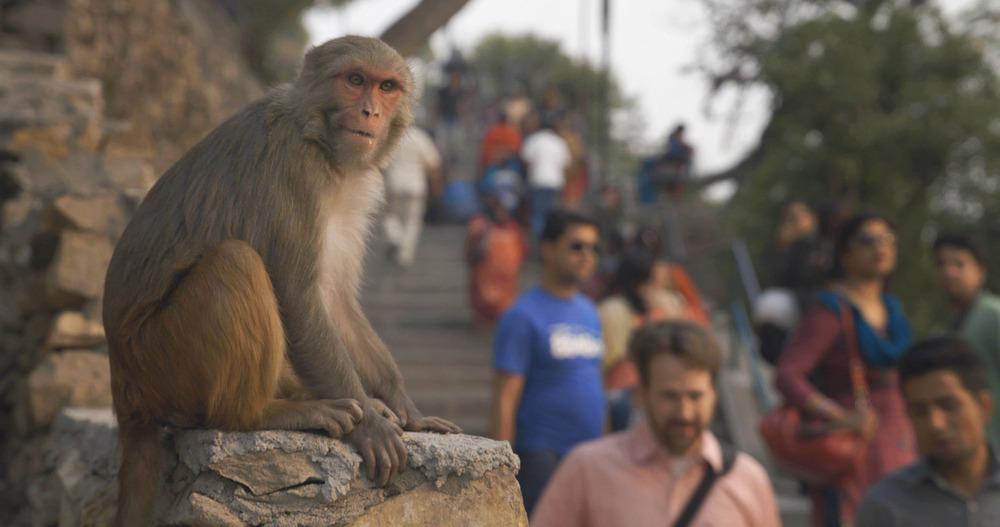 monkey-steps.jpg