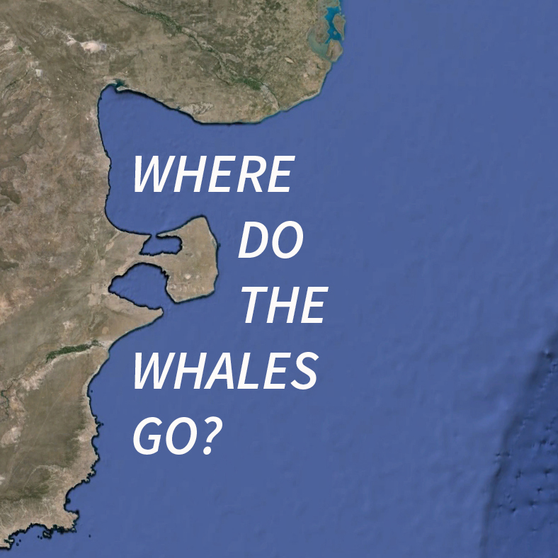 whale-square.jpg