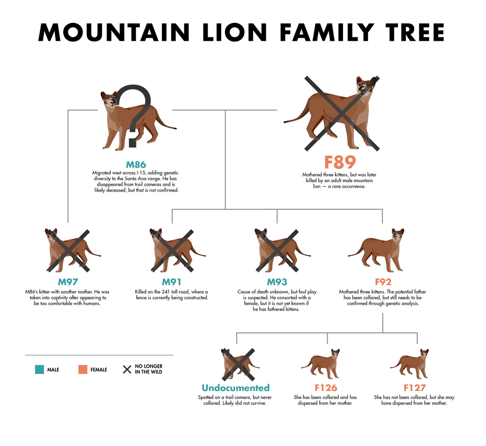 mountain lion habitat map with Mountain Lions on Canadian Wild Cats additionally Mountain Lions as well The Puma in addition 799563 further 5752247128.