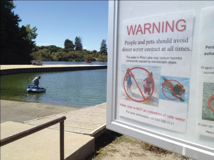 Signs are posted by Pinto Lake to warn the public. During large blooms, visitors must sign a waiver before entering the water. The lake is closed when the blooms are highly toxic.