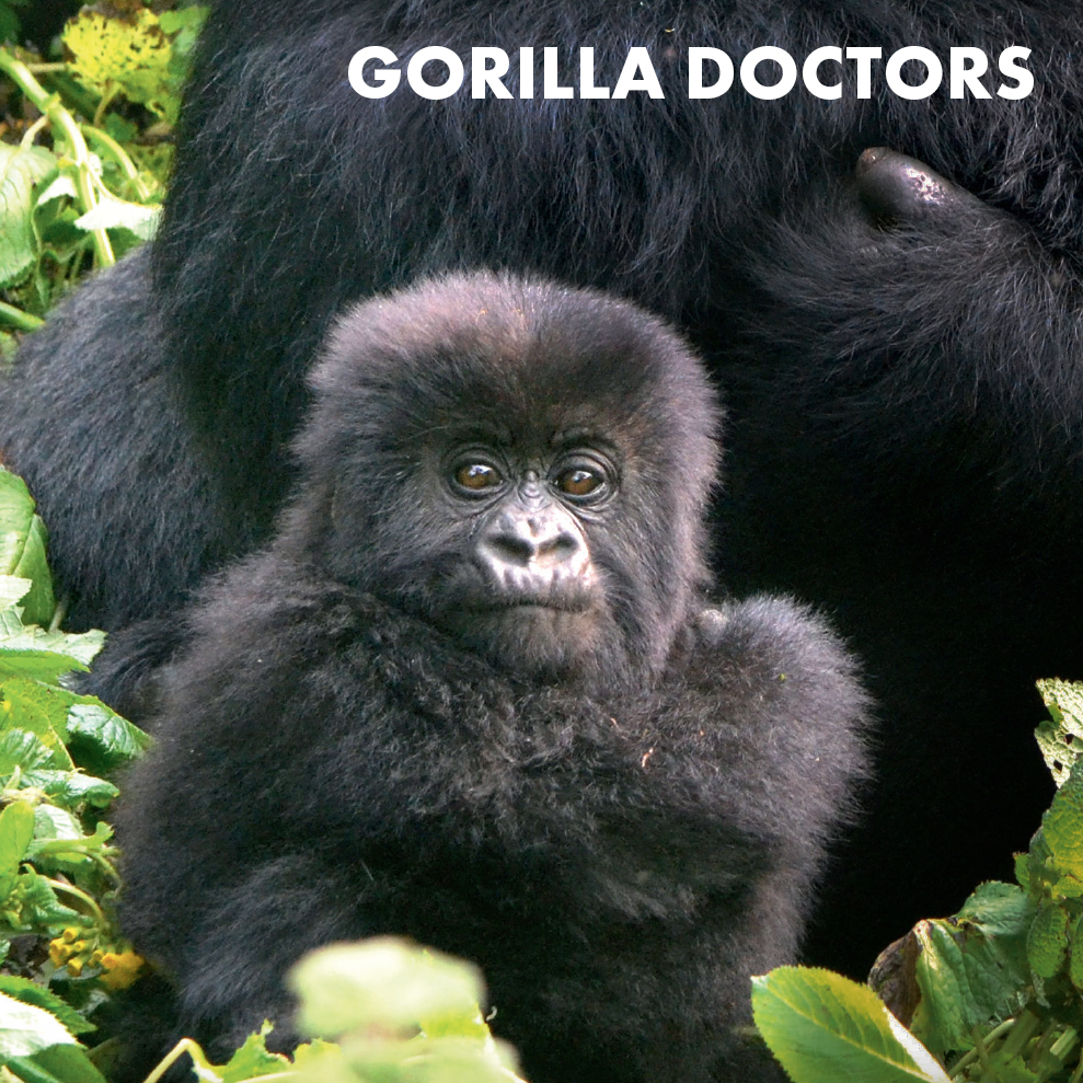 gorilla-doctors-icon.jpg
