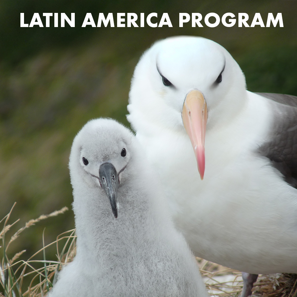latin-america-program-icon.jpg