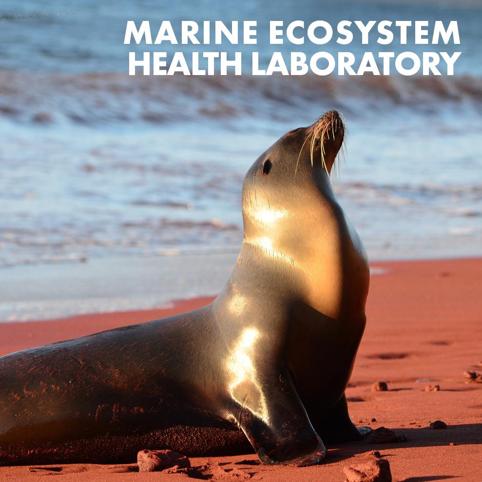 marine-ecosystem-health-laboratory-icon.jpg
