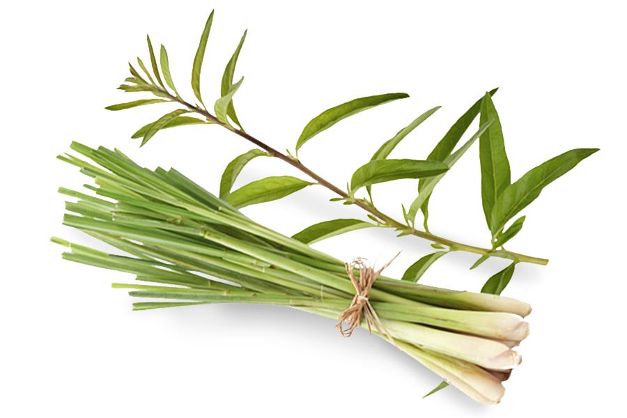 lemongrass-essential-oil.jpg