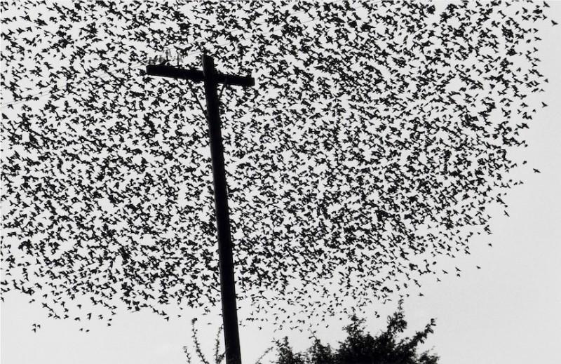 """De la serie """"pájaros"""" de Graciela Iturbide.  Una de mis fotos favoritas, excelente para iniciar."""