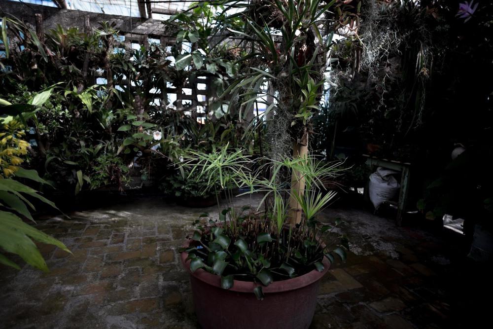 orchids_-3.jpg