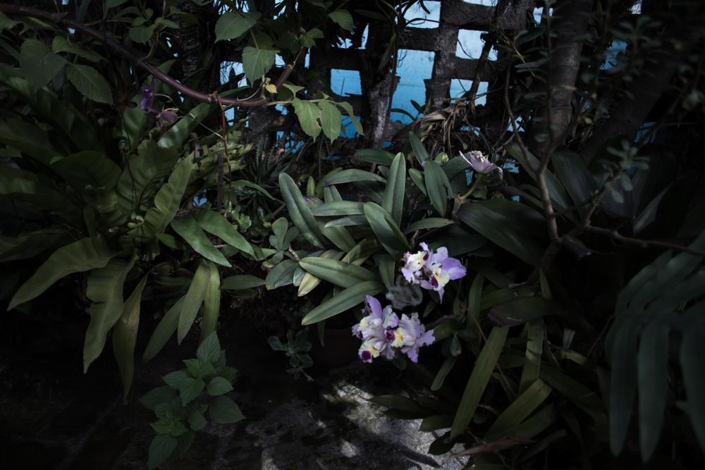 orchids_-4.jpg
