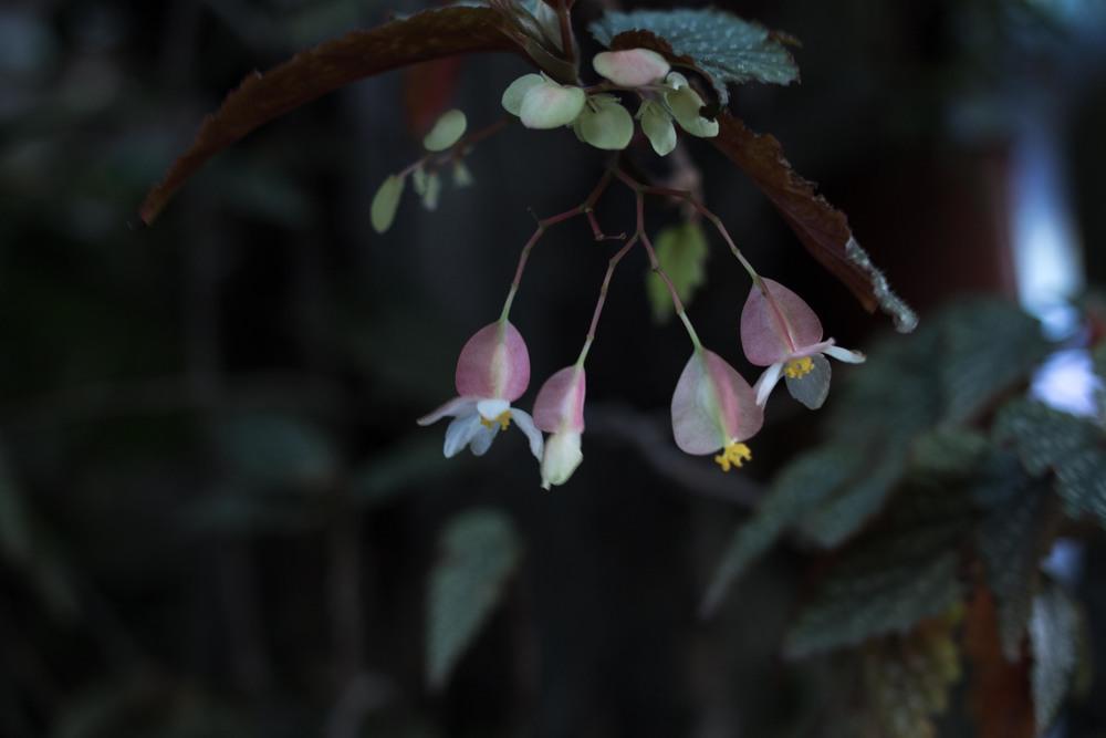 orchids_-8.jpg