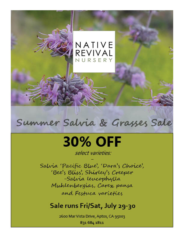 Salvia & Grass Sale 2016.jpg