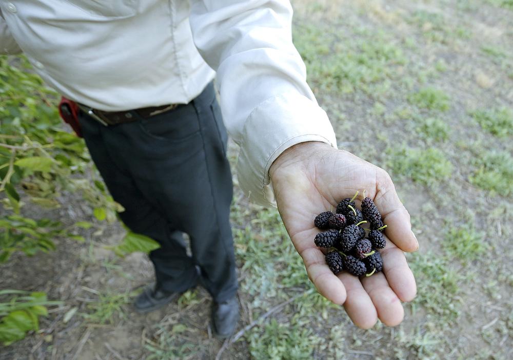 berries_1500.jpg